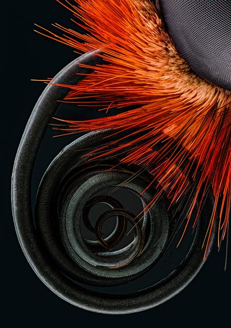 science-04-29089-schroeder-butterfly-proboscis