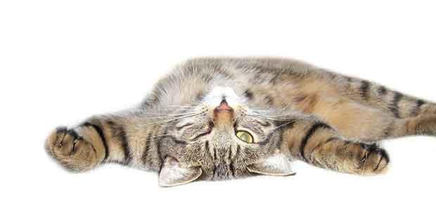 stress-du-chat-1