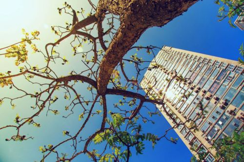 arbre-immeuble