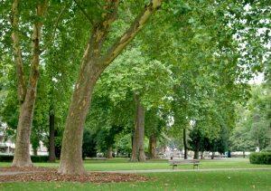 arbre_parc_contades