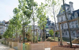 arbres648x415_jardin-ephemere-devant-hotel-ville-paris-juin-2011
