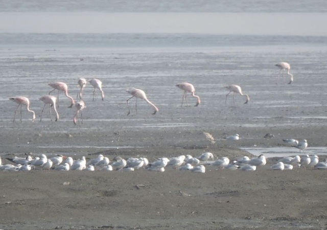 untitled-bmpinde-site-s-flamants