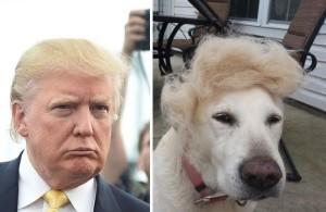 donald-trump-funny-look-alike-2__700-600x390