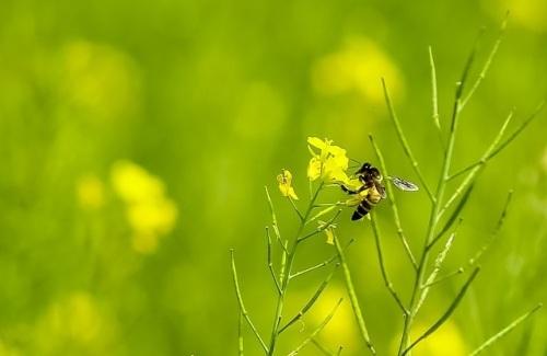 untitled-bmpbiodiversite-abeilles-02