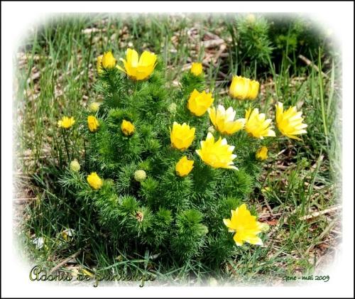untitled-bmpbiodiversite-jaune