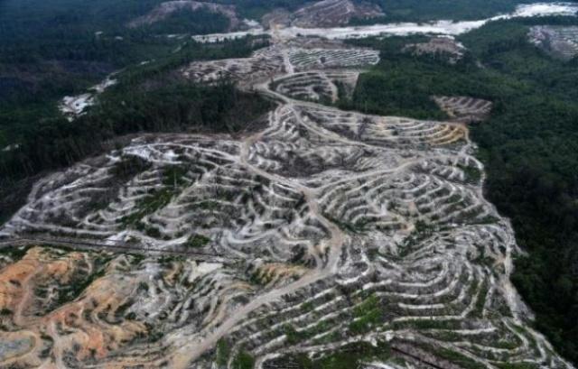 foret-2014-province-ile-borneo-indonesie-ou-foret-vierge-detruite-faire-place-a-plantation