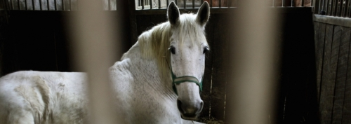 jument21957_horselying80p_6_959x340
