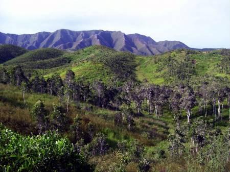 notre-planetesavane-niaoulis-malabou-nouvelle-caledonie