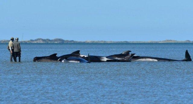 baleines-secourues
