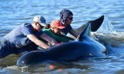 baleines_nouvelle-zelande-comment-empecher-un-nouvel-echouage-de-baleines_a00b8ec8f4a471b4d5a5a97978228f019f94eb07-highdef