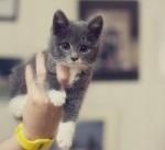 chat-dans-main