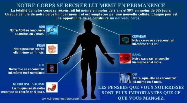 Medecine Quantique unification des sciences Bioenergetique-notre-corps-se-recree-en-permanence-724-op