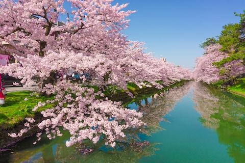 Cherry Blossom rencontres escroqueries
